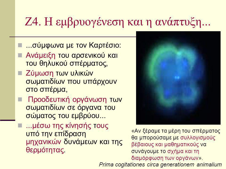 Ζ4. Η εμβρυογένεση και η ανάπτυξη...