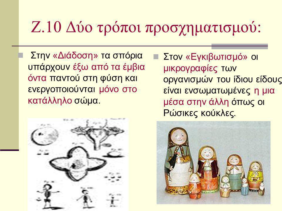 Ζ.10 Δύο τρόποι προσχηματισμού: