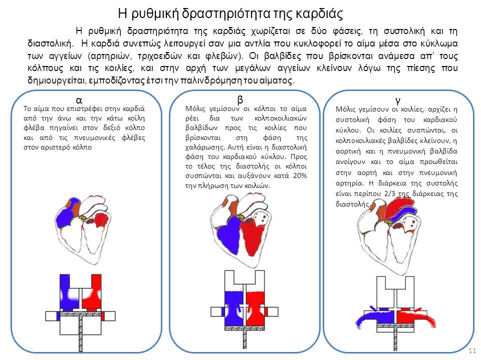 Η ρυθμική δραστηριότητα της καρδιάς
