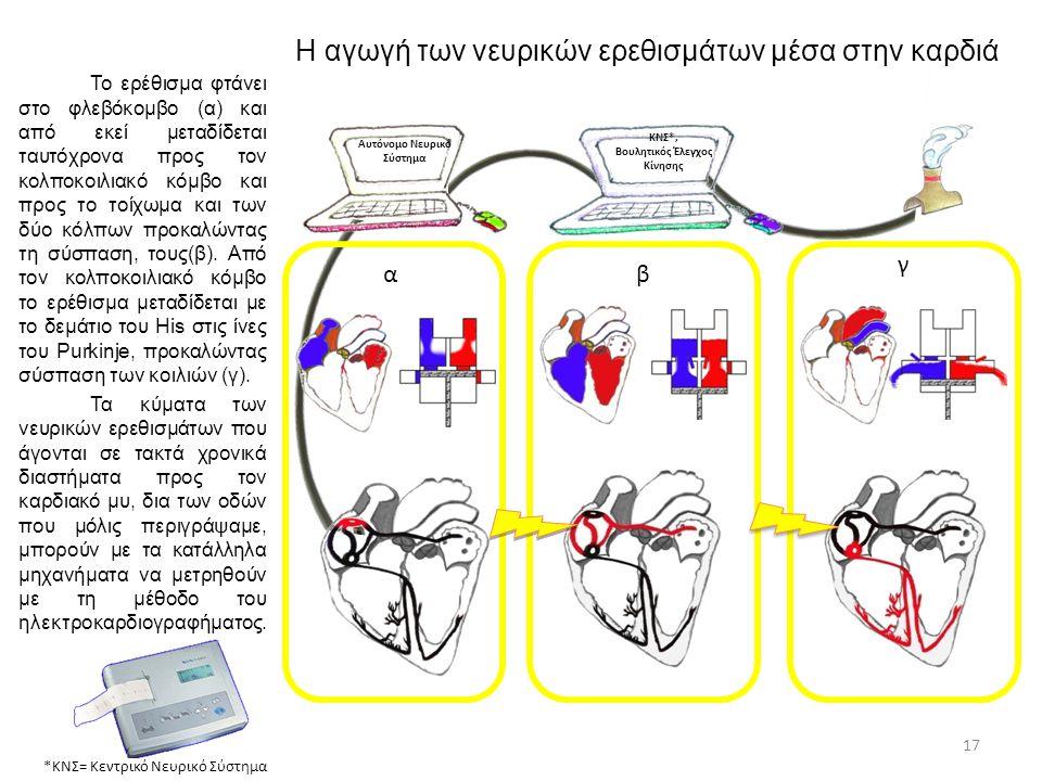 Η αγωγή των νευρικών ερεθισμάτων μέσα στην καρδιά