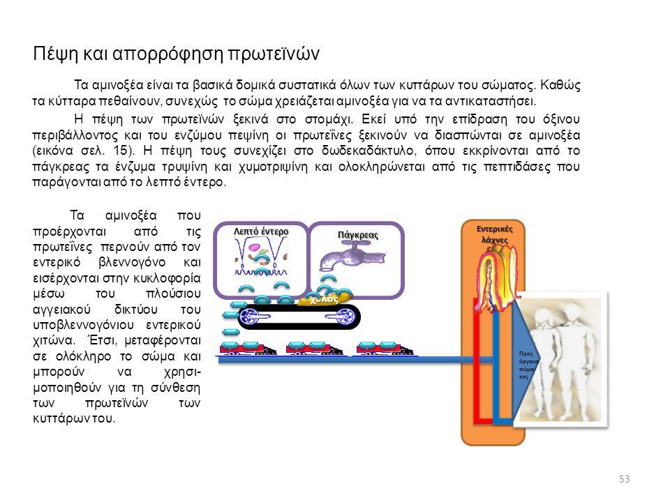 Πέψη και απορρόφηση πρωτεϊνών