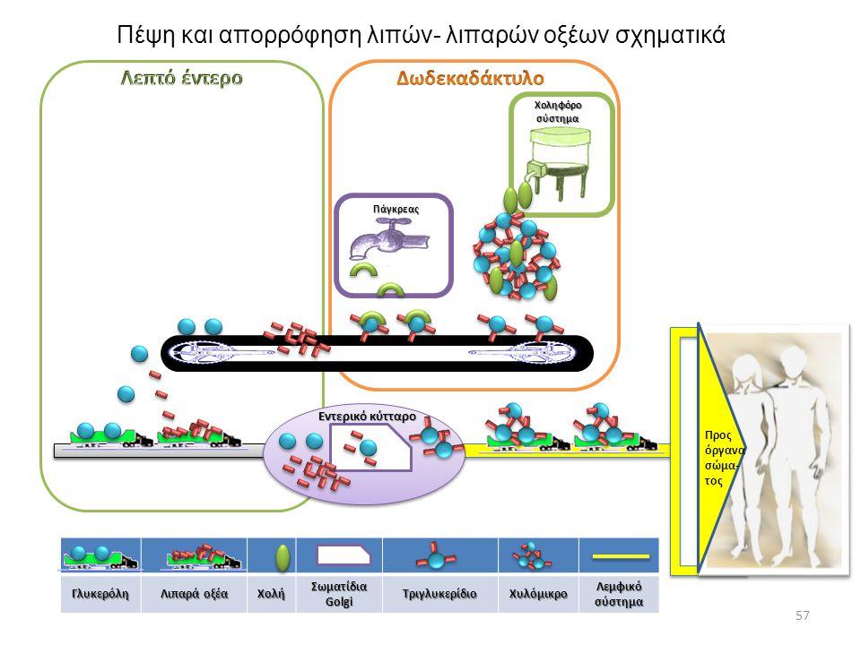 Πέψη και απορρόφηση λιπών- λιπαρών οξέων σχηματικά