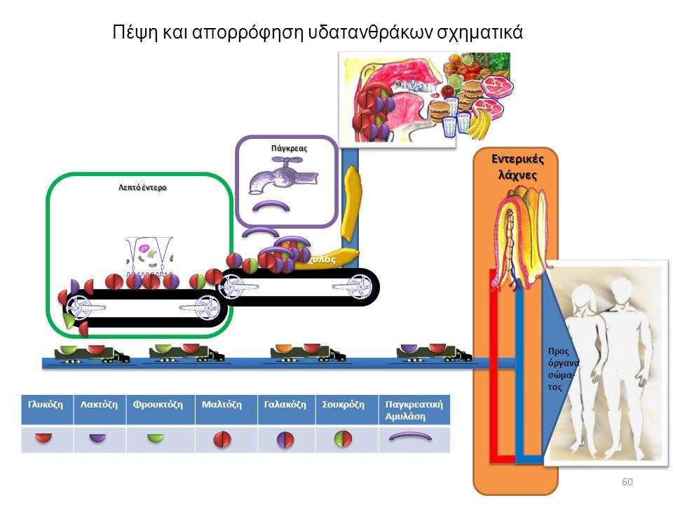 Πέψη και απορρόφηση υδατανθράκων σχηματικά