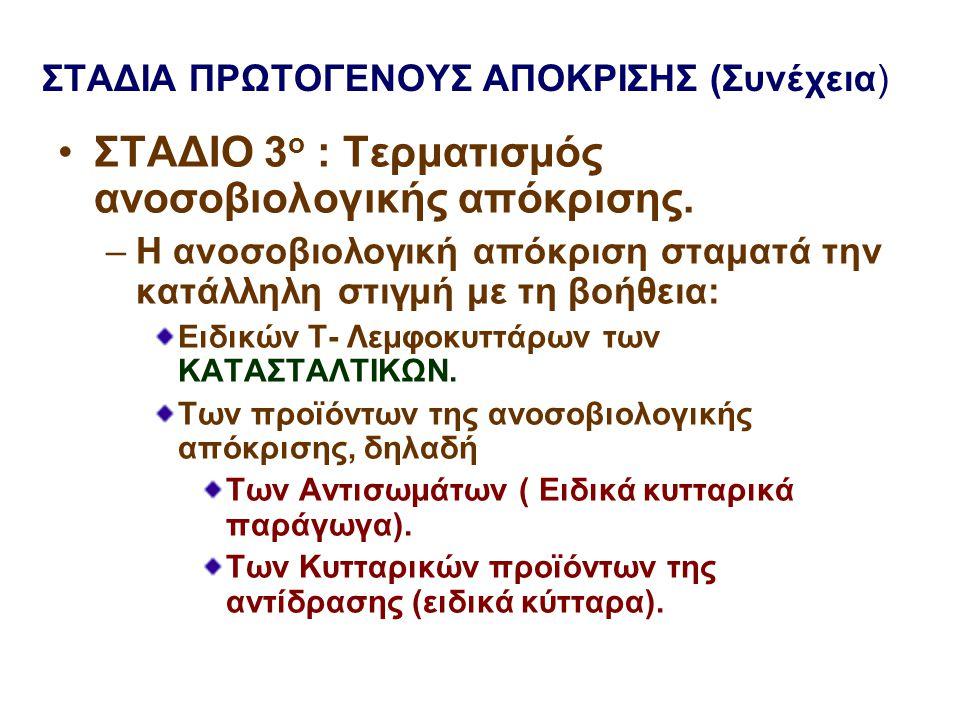 ΣΤΑΔΙΑ ΠΡΩΤΟΓΕΝΟΥΣ ΑΠΟΚΡΙΣΗΣ (Συνέχεια)