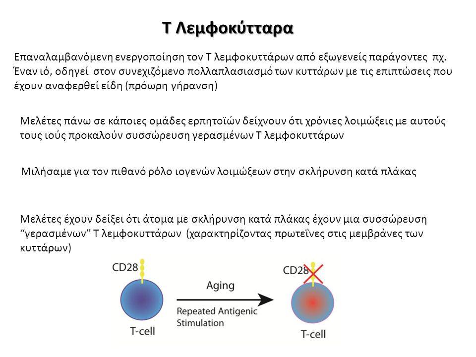 Τ Λεμφοκύτταρα