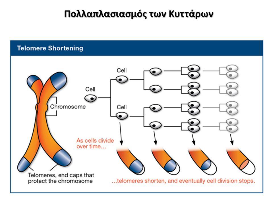 Πολλαπλασιασμός των Κυττάρων