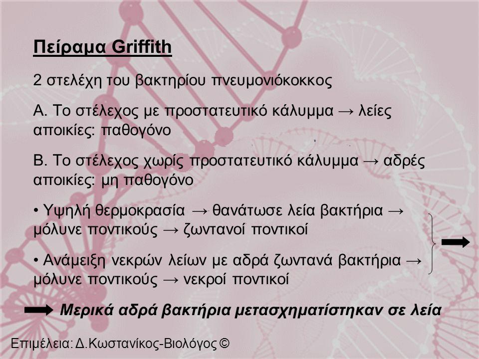 Πείραμα Griffith 2 στελέχη του βακτηρίου πνευμονιόκοκκος