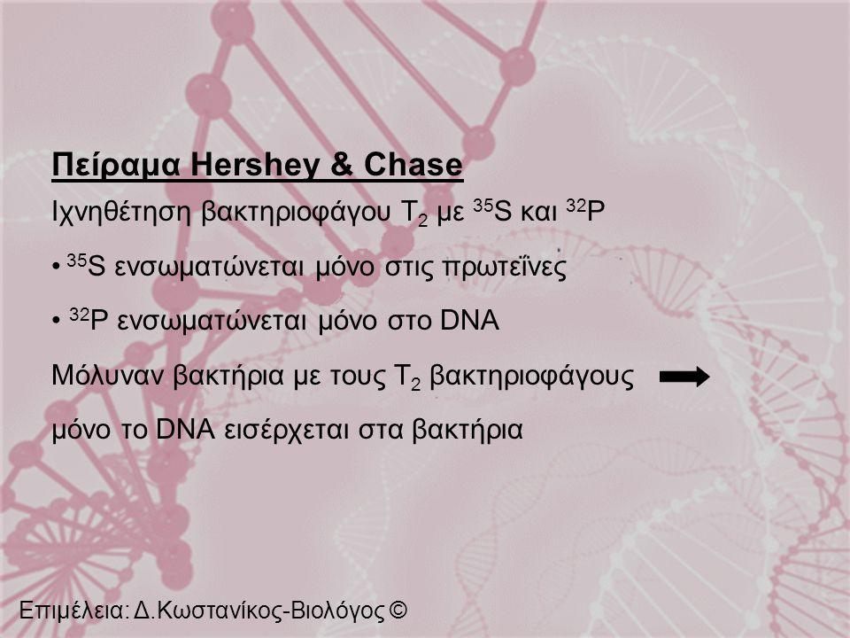 Πείραμα Hershey & Chase