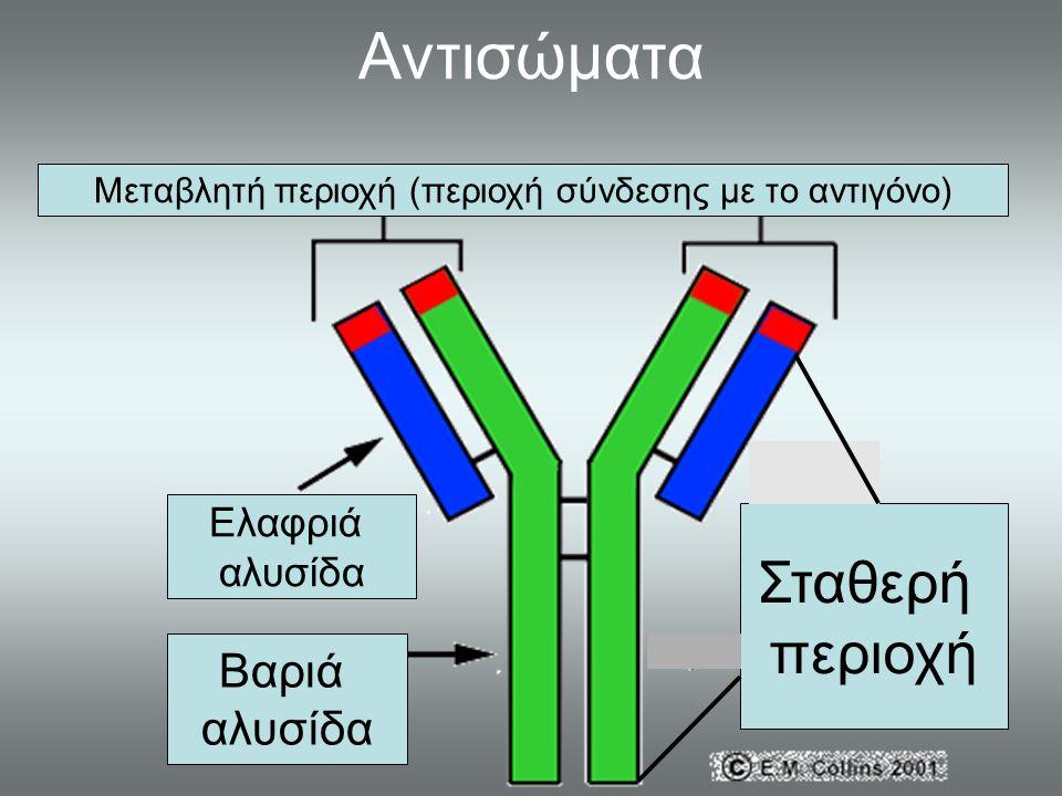 Μεταβλητή περιοχή (περιοχή σύνδεσης με το αντιγόνο)