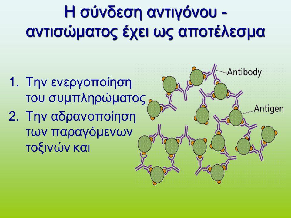 Η σύνδεση αντιγόνου - αντισώματος έχει ως αποτέλεσμα