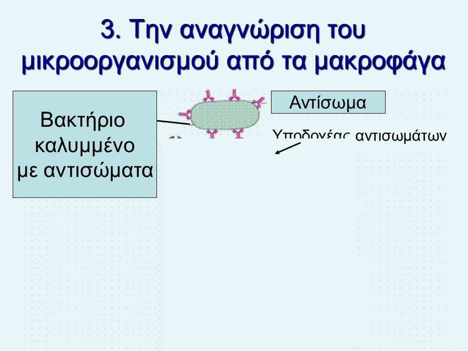 3. Την αναγνώριση του μικροοργανισμού από τα μακροφάγα