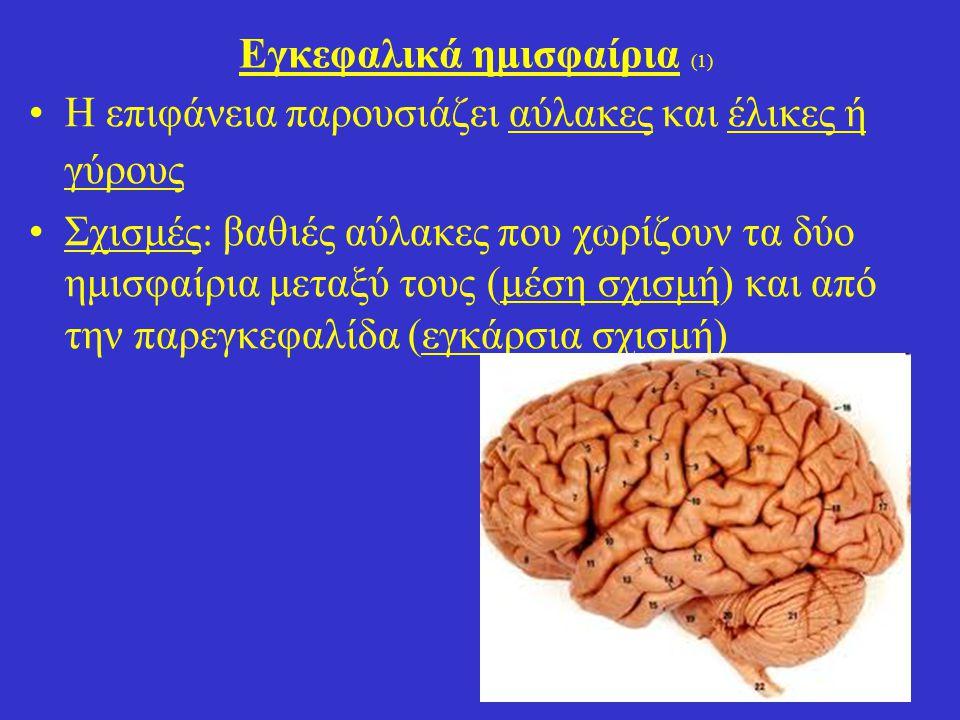 Εγκεφαλικά ημισφαίρια (1)