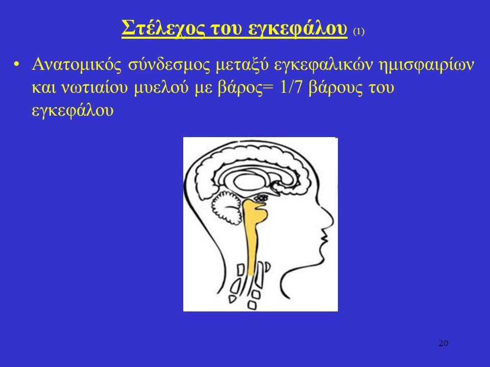 Στέλεχος του εγκεφάλου (1)