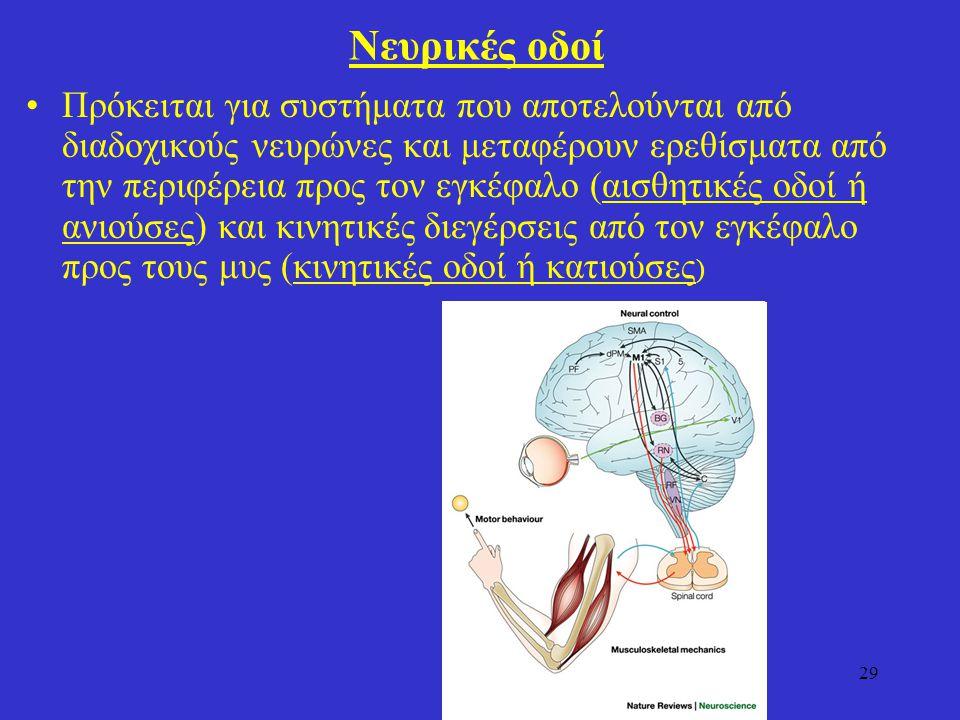 Νευρικές οδοί