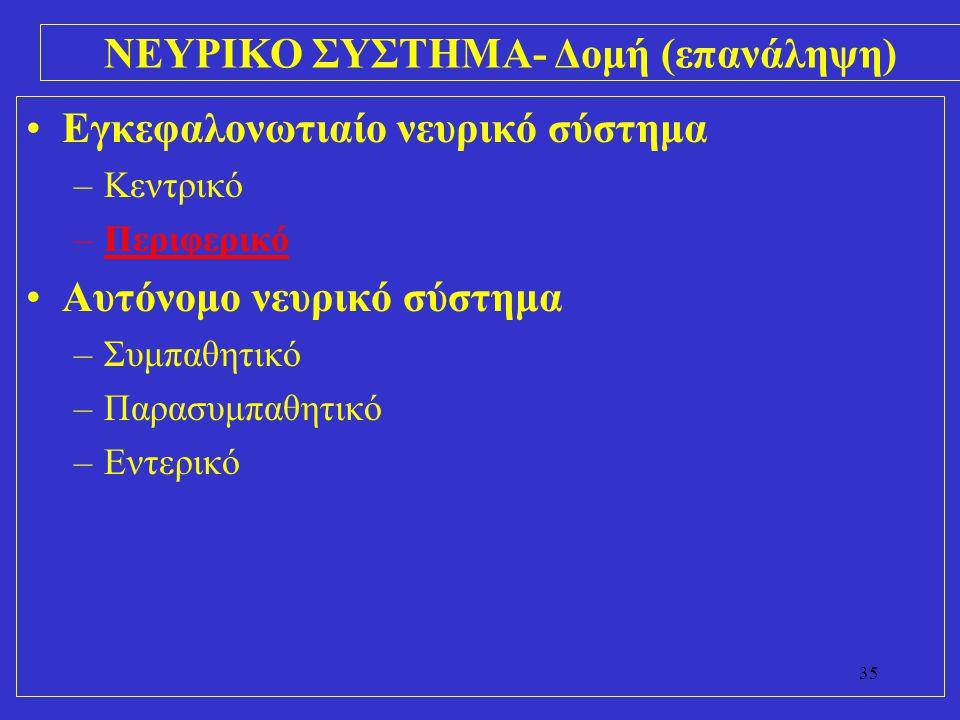 ΝΕΥΡΙΚΟ ΣΥΣΤΗΜΑ- Δομή (επανάληψη)