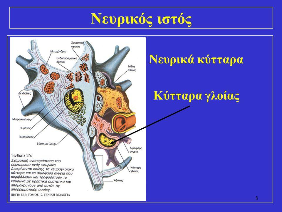 Νευρικός ιστός Νευρικά κύτταρα Κύτταρα γλοίας