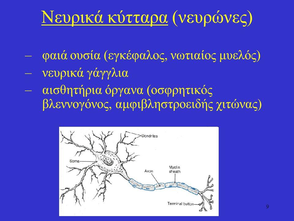 Νευρικά κύτταρα (νευρώνες)