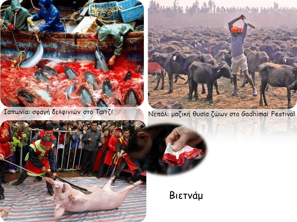 Βιετνάμ Ιαπωνία: σφαγή δελφινιών στο Ταϊτζί