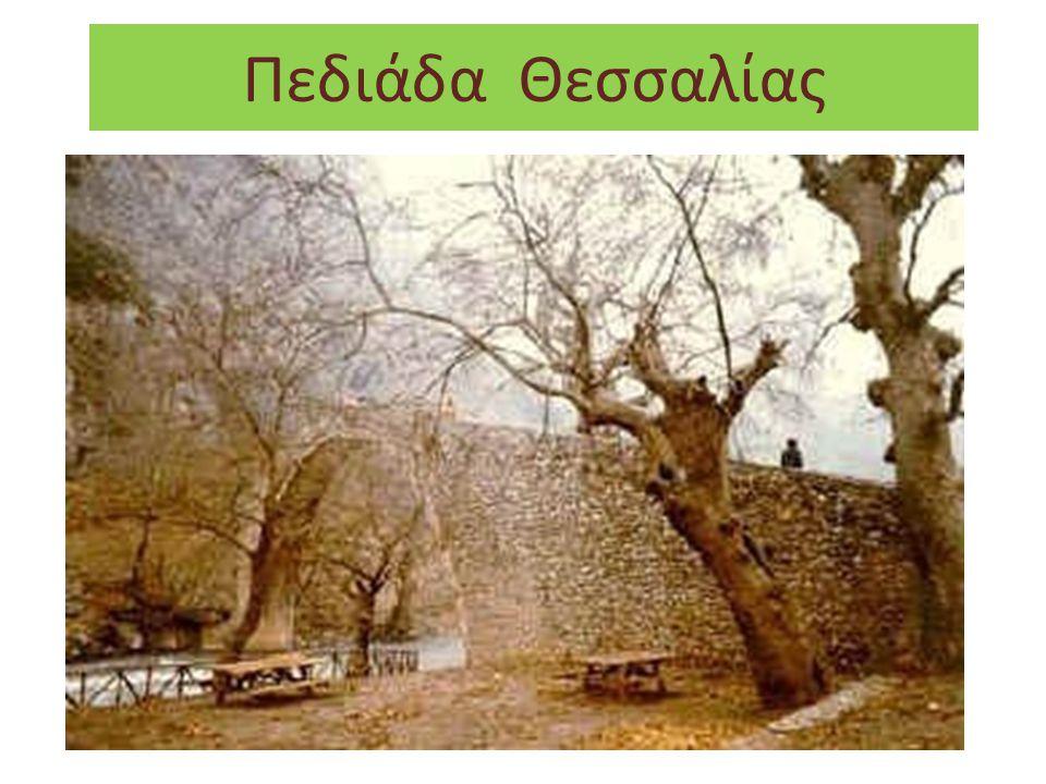 Πεδιάδα Θεσσαλίας