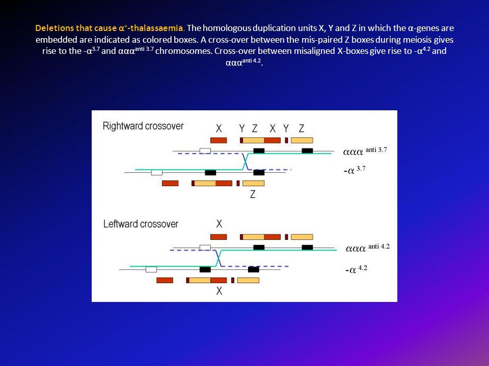Deletions that cause α+-thalassaemia