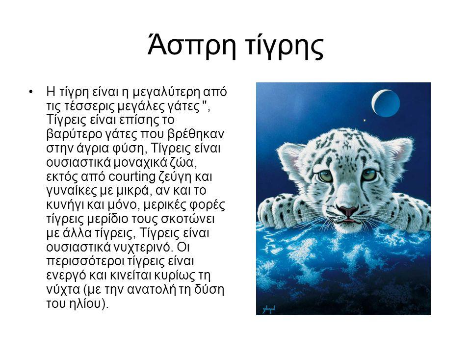 Άσπρη τίγρης