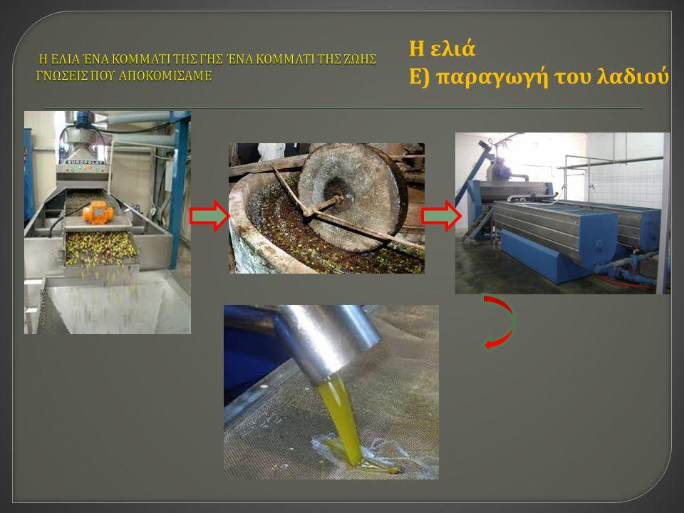 Η ελιά Ε) παραγωγή του λαδιού