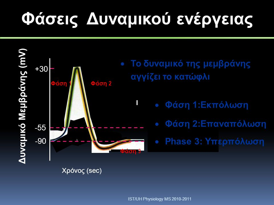 Φάσεις Δυναμικού ενέργειας