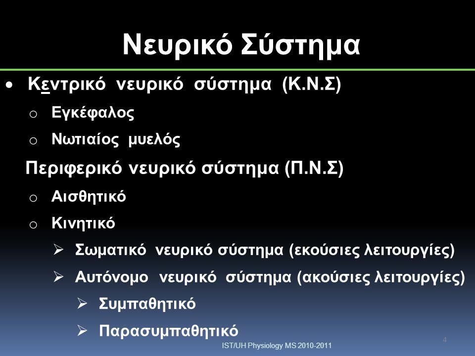 Νευρικό Σύστημα Κεντρικό νευρικό σύστημα (Κ.Ν.Σ)