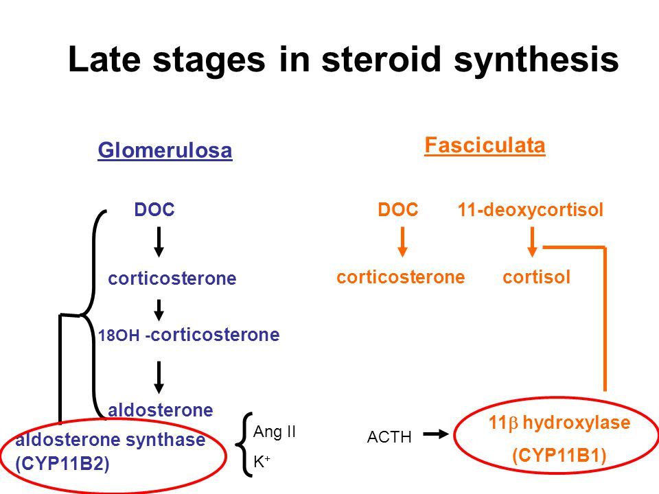 Late stages in steroid synthesis