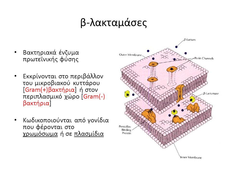 β-λακταμάσες Βακτηριακά ένζυμα πρωτεϊνικής φύσης