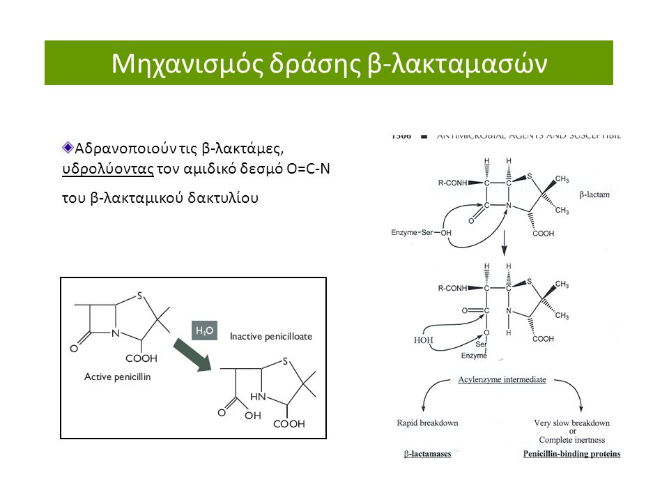 Μηχανισμός δράσης β-λακταμασών