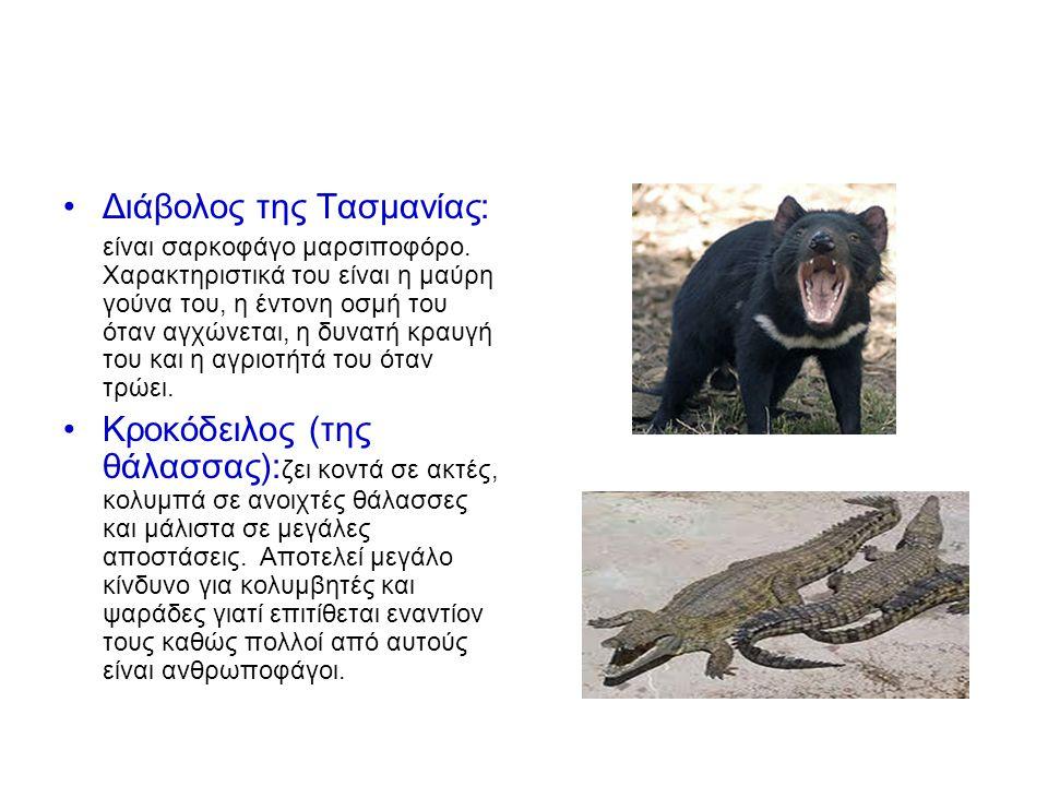 Διάβολος της Τασμανίας:
