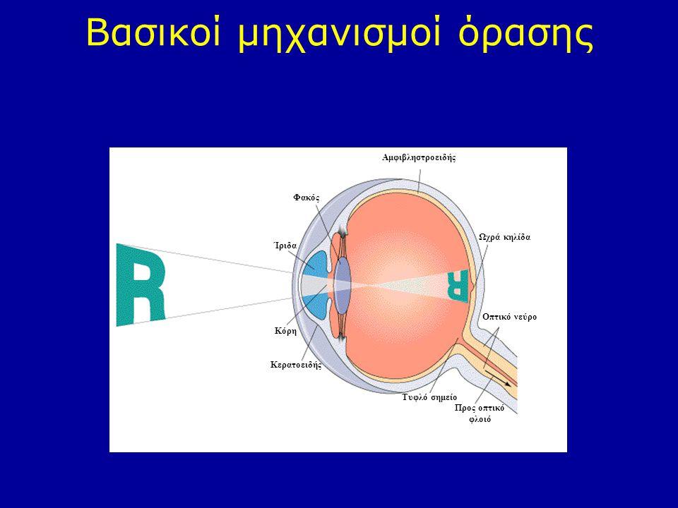 Βασικοί μηχανισμοί όρασης