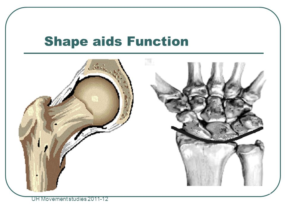 Shape aids Function UH Movement studies
