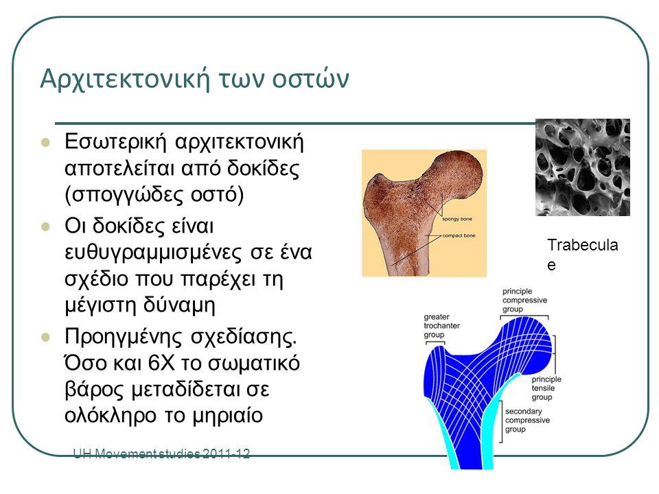 Αρχιτεκτονική των οστών