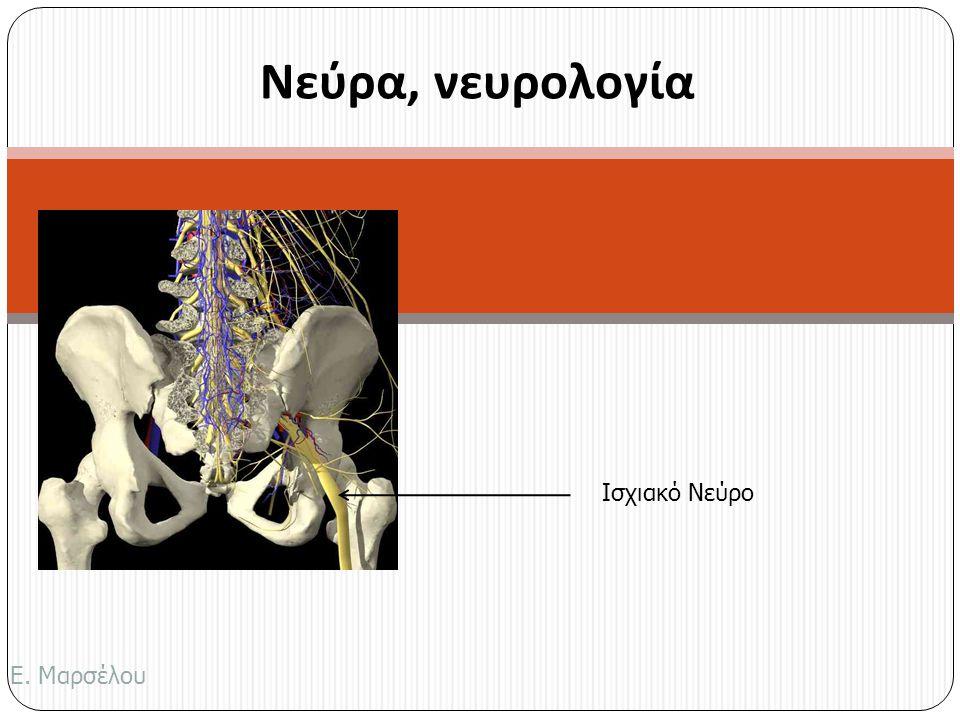 Νεύρα, νευρολογία Ισχιακό Νεύρο Ε. Μαρσέλου