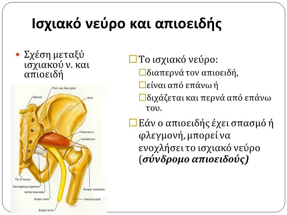 Ισχιακό νεύρο και απιοειδής