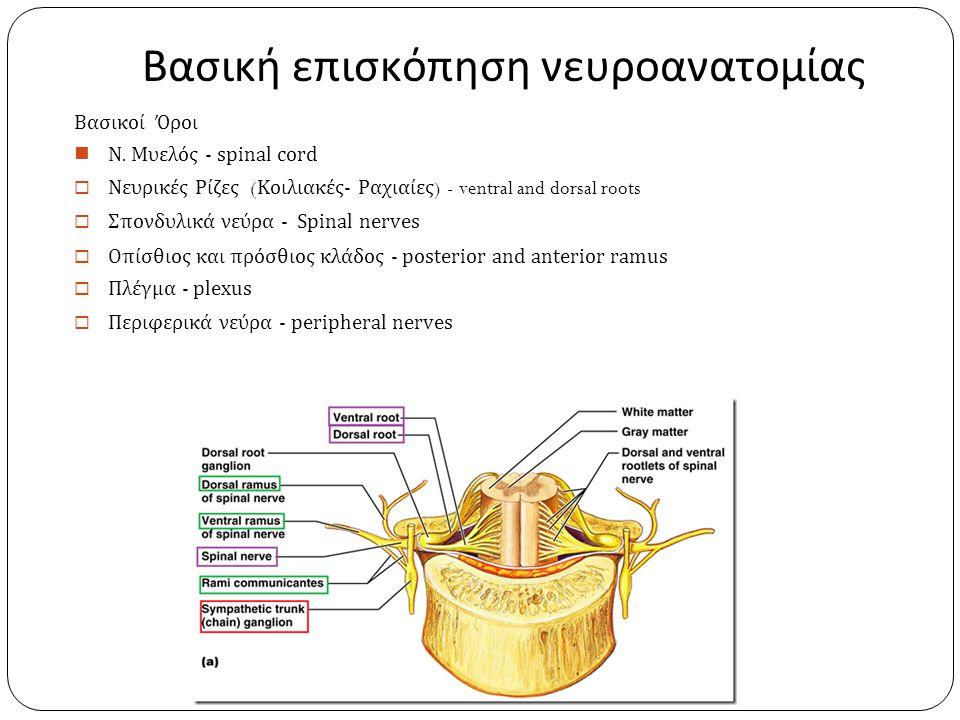 Βασική επισκόπηση νευροανατομίας