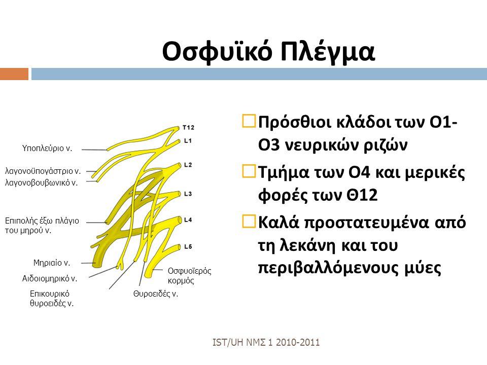 Οσφυϊκό Πλέγμα Πρόσθιοι κλάδοι των Ο1- Ο3 νευρικών ριζών