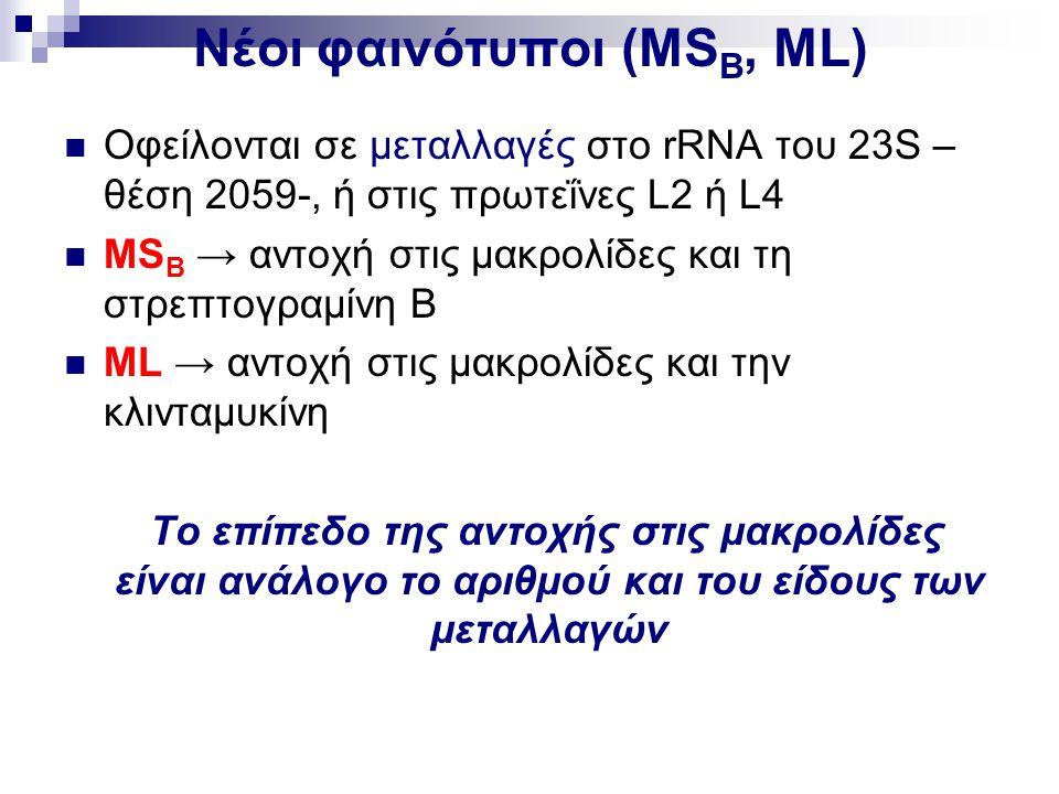 Νέοι φαινότυποι (ΜSB, ML)