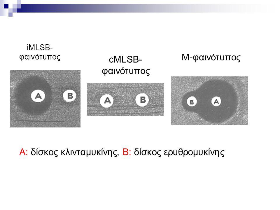 A: δίσκος κλινταμυκίνης, Β: δίσκος ερυθρομυκίνης