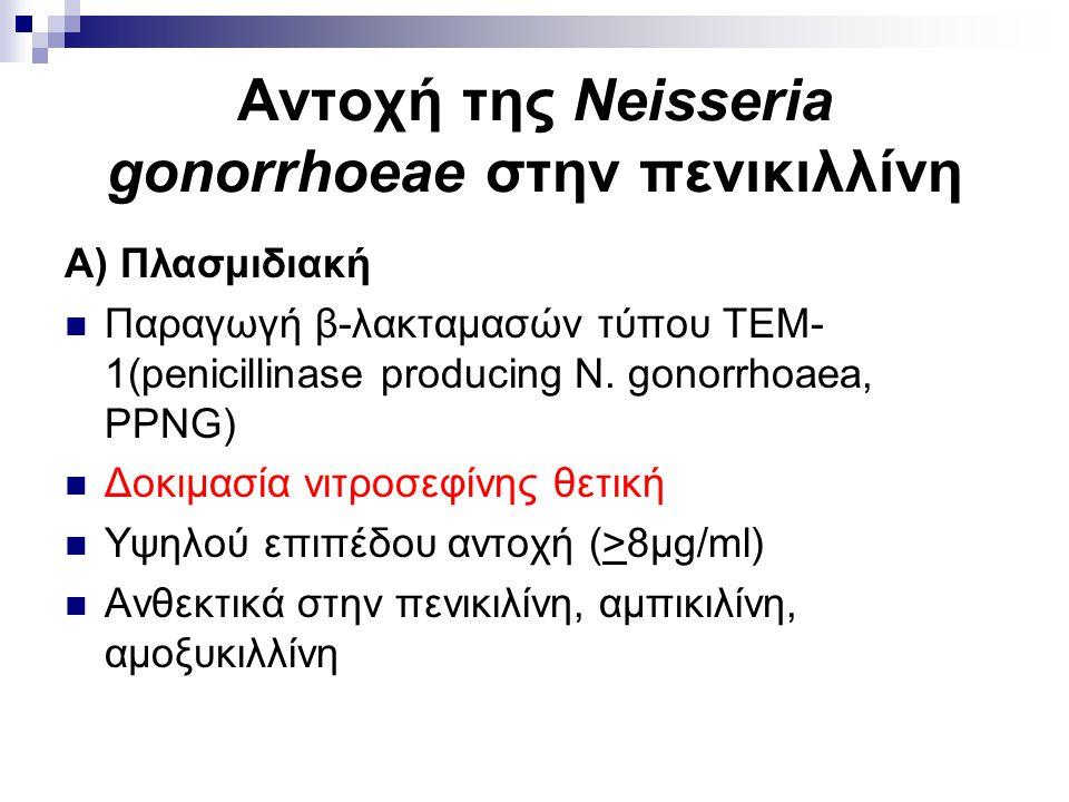 Αντοχή της Neisseria gonorrhoeae στην πενικιλλίνη