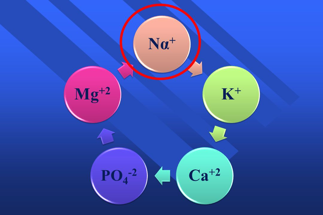 Να+ Κ+ Ca+2 PO4-2 Mg+2
