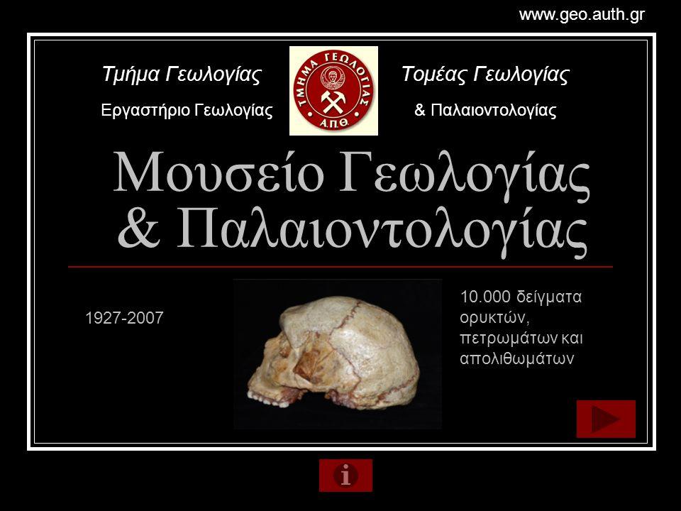 Μουσείο Γεωλογίας & Παλαιοντολογίας