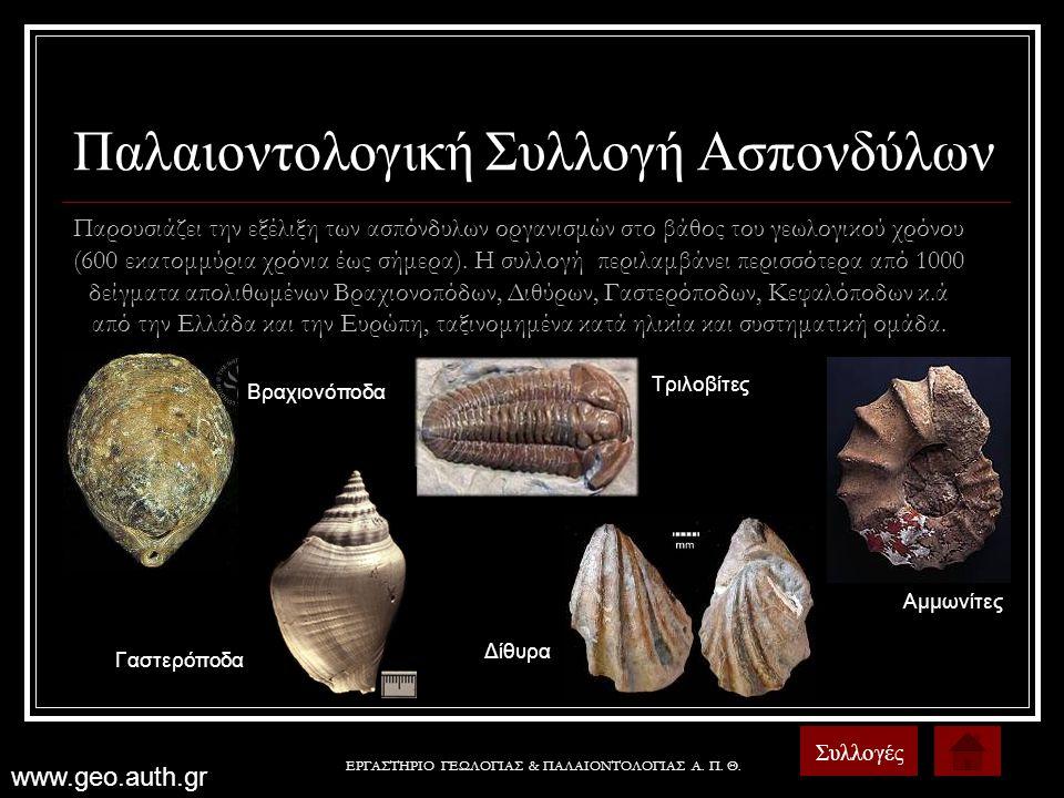 Παλαιοντολογική Συλλογή Ασπονδύλων