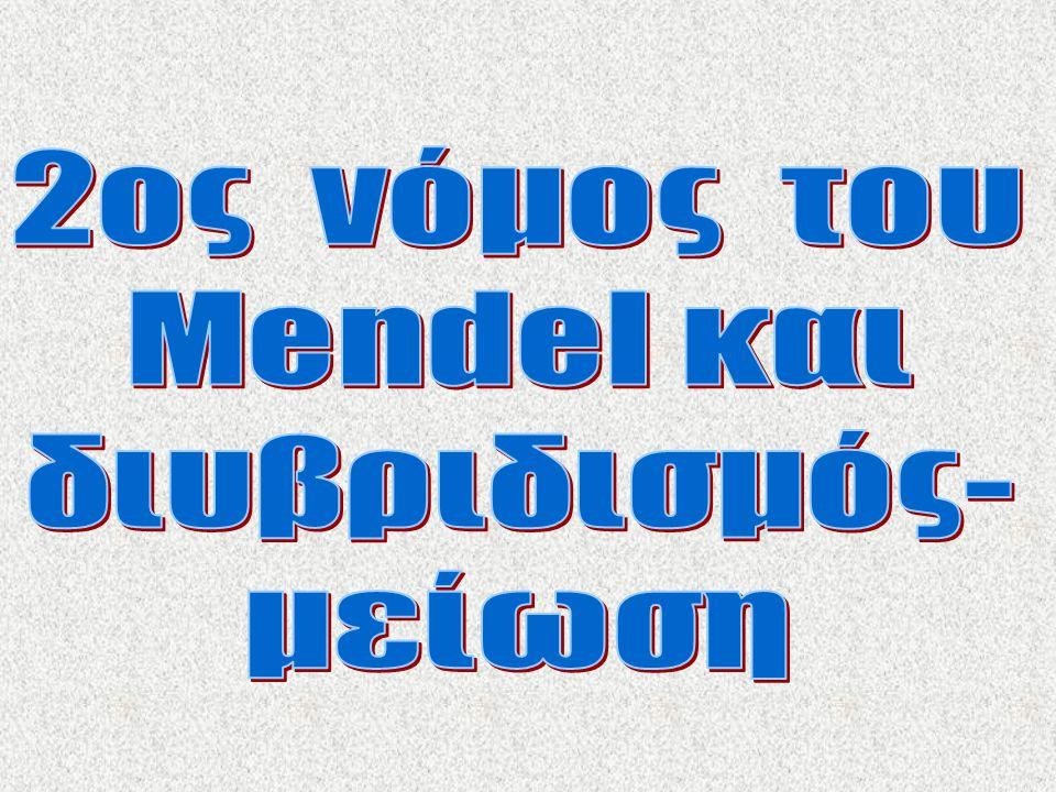 2ος νόμος του Mendel και διυβριδισμός- μείωση