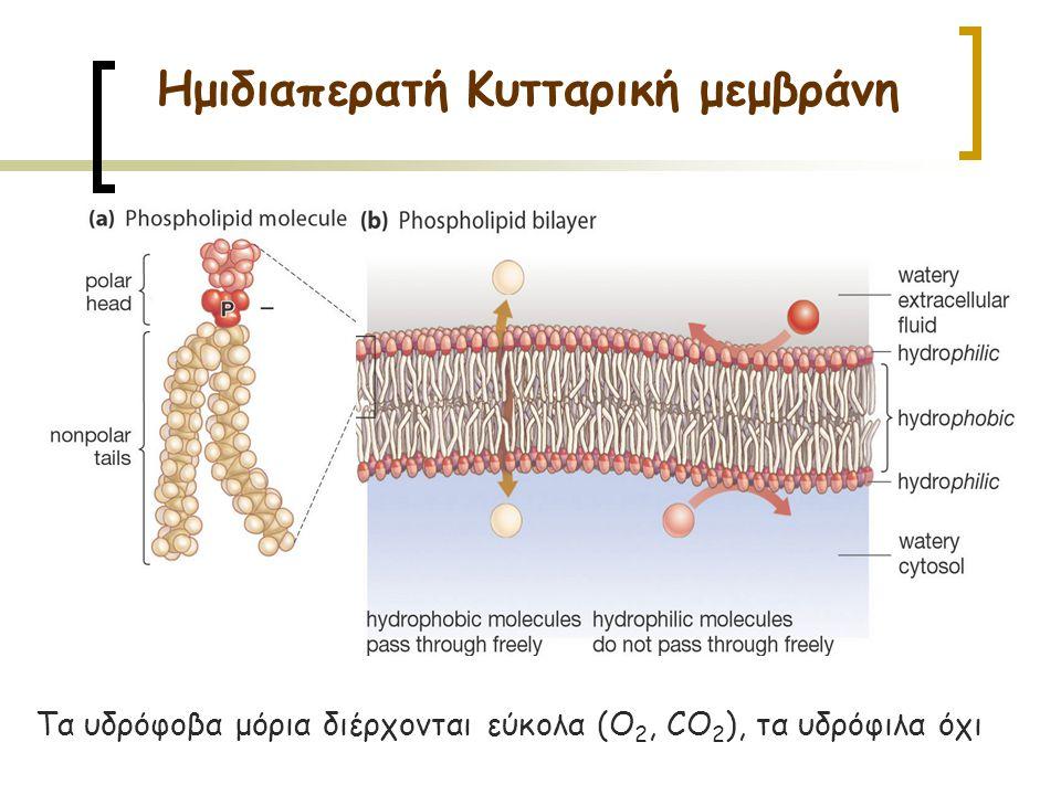 Ημιδιαπερατή Κυτταρική μεμβράνη