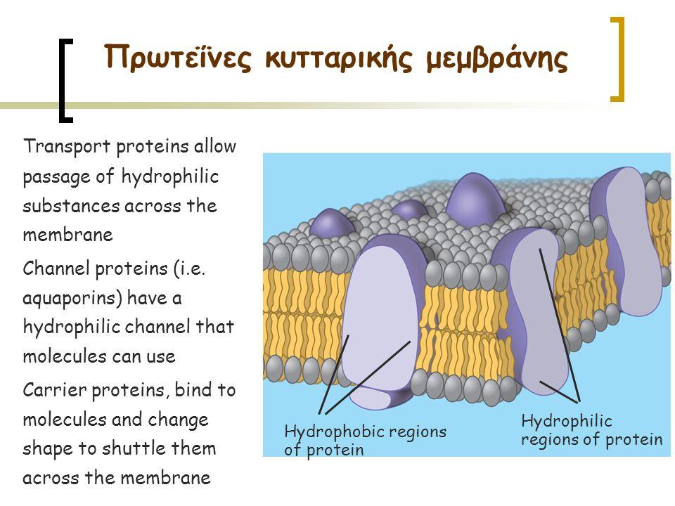Πρωτεΐνες κυτταρικής μεμβράνης