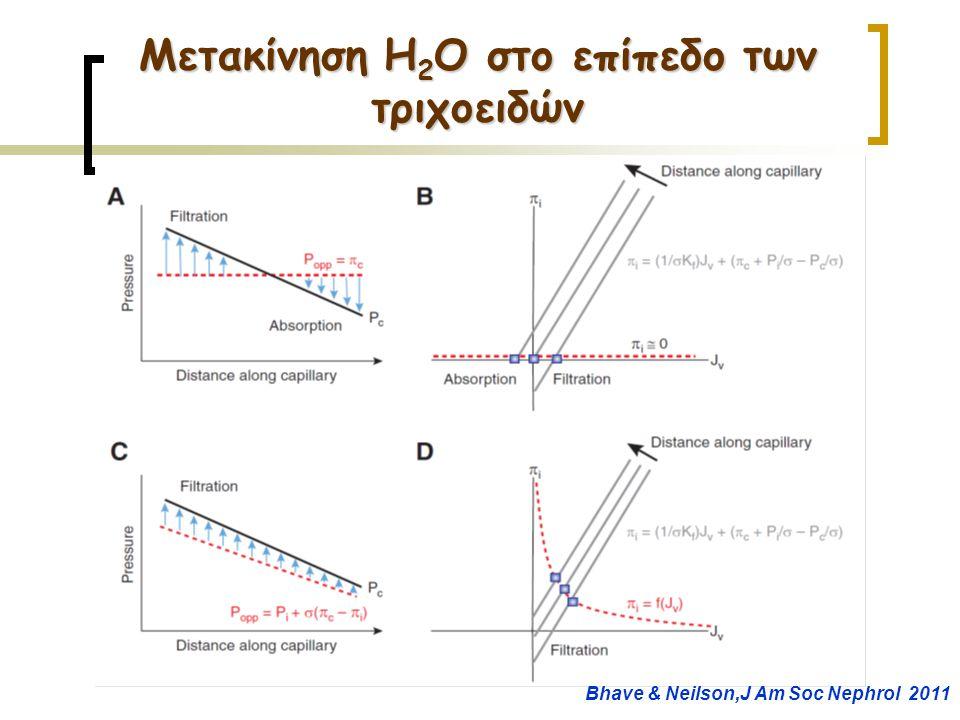 Μετακίνηση H2O στο επίπεδο των τριχοειδών