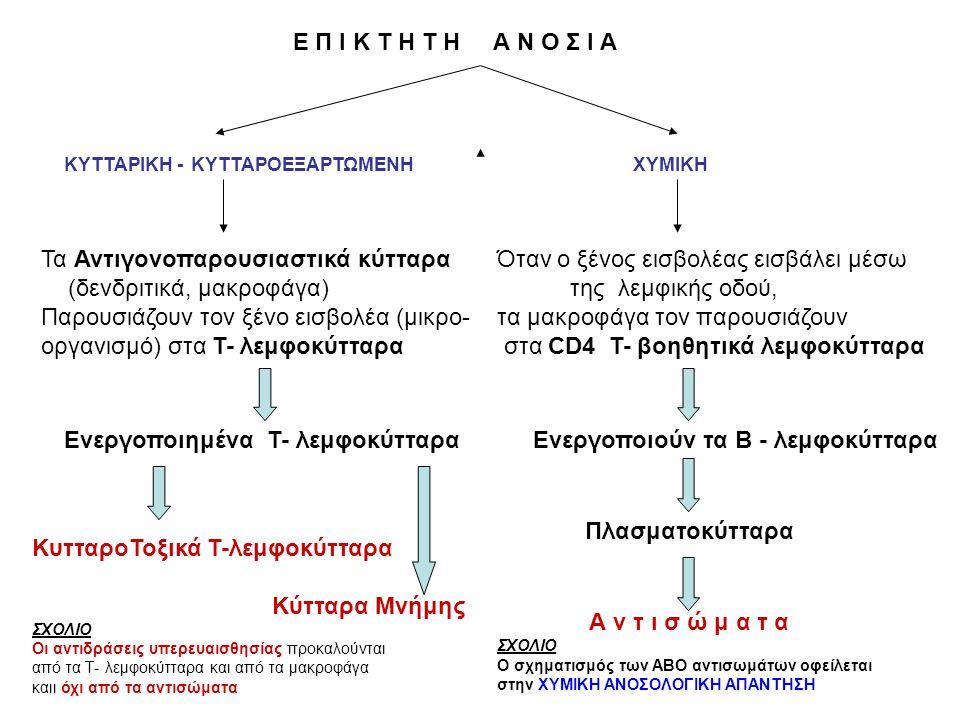 Τα Αντιγονοπαρουσιαστικά κύτταρα (δενδριτικά, μακροφάγα)